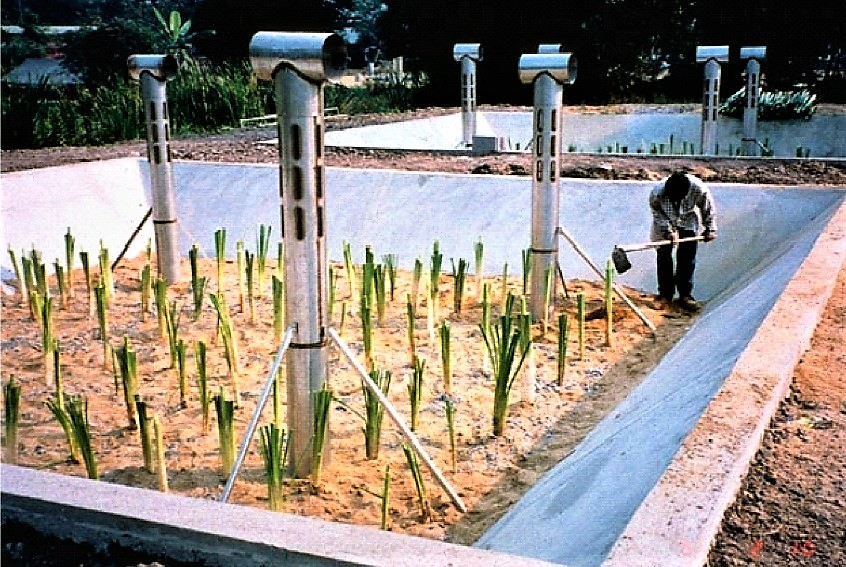 Planted sludge drying beds, also designated as reed beds or constructed wetlands, could minimise the need for frequent removal of dried sludge as they can be operated for several years before sludge removal becomes necessary. Source: EAWAG/SANDEC (2008)