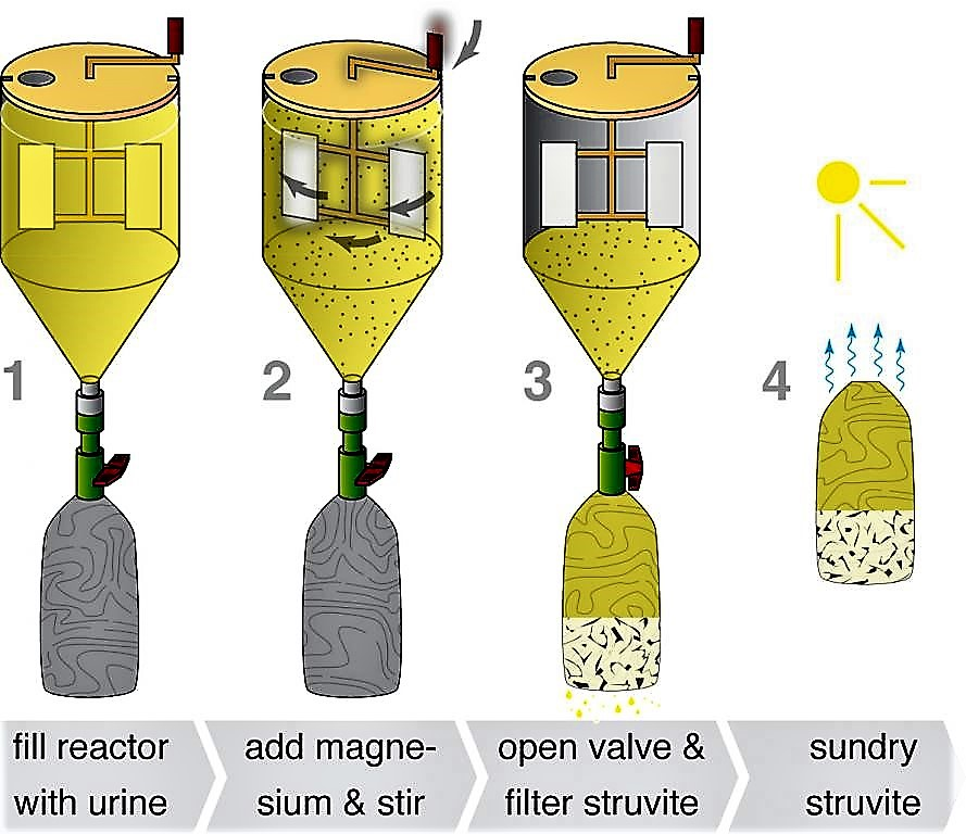 The basic steps of struvite production in the precipitation reactor. Source: ETTER (2009)