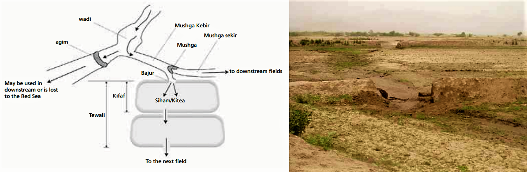 A field-to-field distribution in Eritrea. The picture on the right side shows cuts on the bunds to irrigate the next field. Source: FAO (2010)