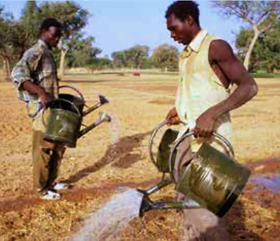 Farmers in Africa irrigate a field with watering cans. The rose on the top of the outlet creates a sprinkler effect. A carry-pole across the shoulders as done in many parts of Asia would simplify the irrigation work. Source: FAO (2011)