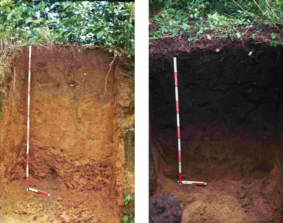 A typical soil from the Amazonian region (Left). The fertile, carbon rich terra preta (black soil). Source: GUENTHER (2007)