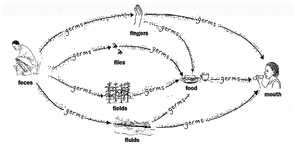 Faecal-oral transmission routes include: Fingers, flies (and other insects), fields (agriculture), food, and fluids, e.g. contaminated water. Source: HESPERIAN & UNDP (2004)