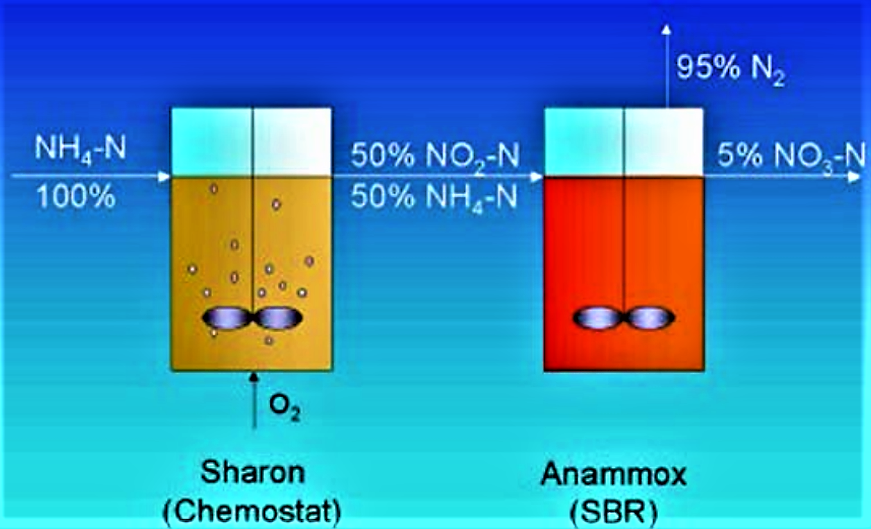 Principle of the combined Sharon Anammox process as it is applied in a treatment plant of Rotterdam. Source: HUMBERT (2011)