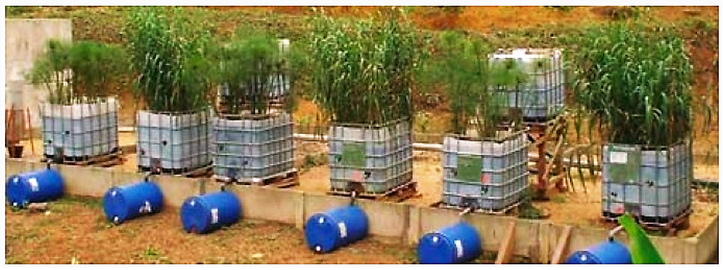Pilot beds of the VFCW developed for faecal sludge dewatering study in sub-Saharan countries. Source: KONE & KENGE (2008)