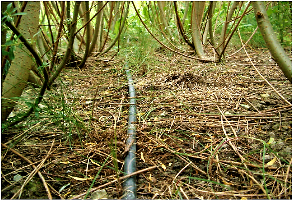 An irrigation pipe placed in a double-row of a willow plantation. Source: LARSSON et al. (2003)