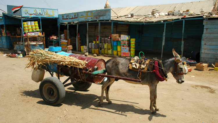Water vendor delivers water at Suakin using a donkey cart