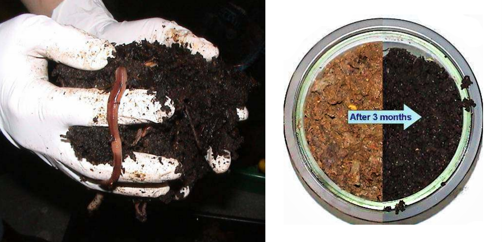 Vermicompost (left) transforms the lacto-fermented kitchen waste and excreta (right) into the black carbon- and fertiliser-rich terra preta. Source: OTTERPOHL (n.y. b)