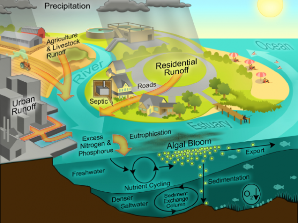 Cultural eutrophication model. Source: PROJECT EUTROPHICATION (n.y)