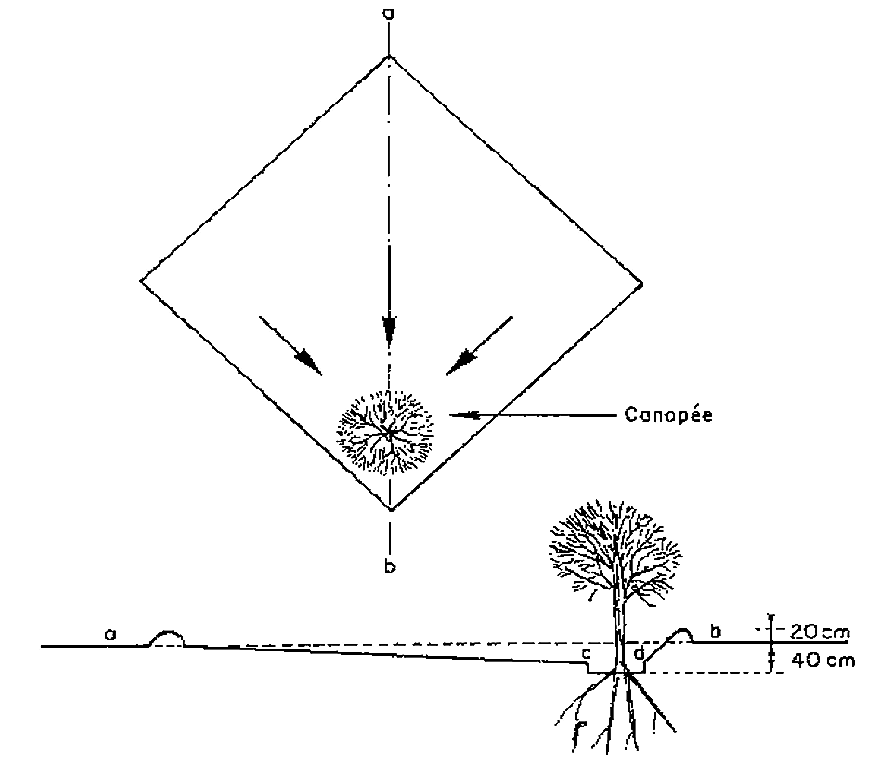 Diagram of a micro basin. Source: ROOSE (1996)