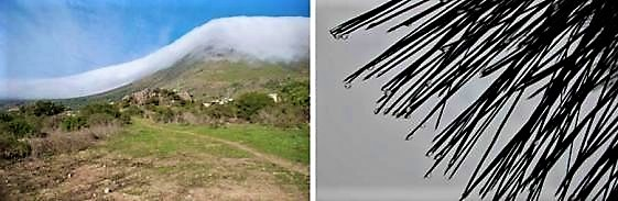 Fog produced by the flow of wind over terrain (left) and needles, with collected droplets from fog (right)