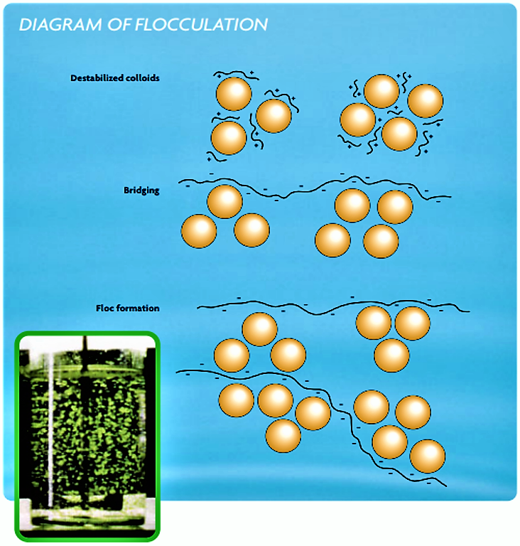 Flocculation mechanism scheme. Source: SNF FLOERGER (n.y.)
