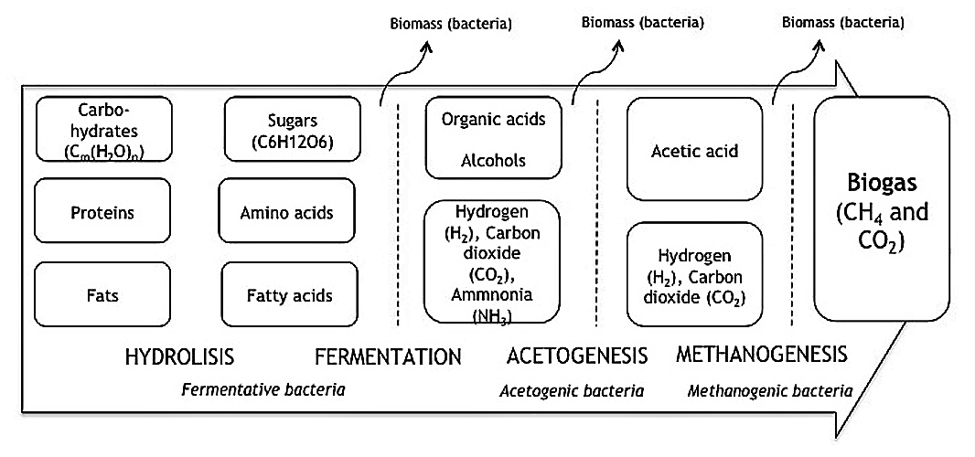 Anaerobic digestion: complex organic molecules, proteins and fats are broken down in a four step process in to a mixture of methane (CH4) and carbon dioxide (CO2) and some trace gasses. The biogas can be collected and the CH4 used as a combustible. Source: SPUHLER (2010).