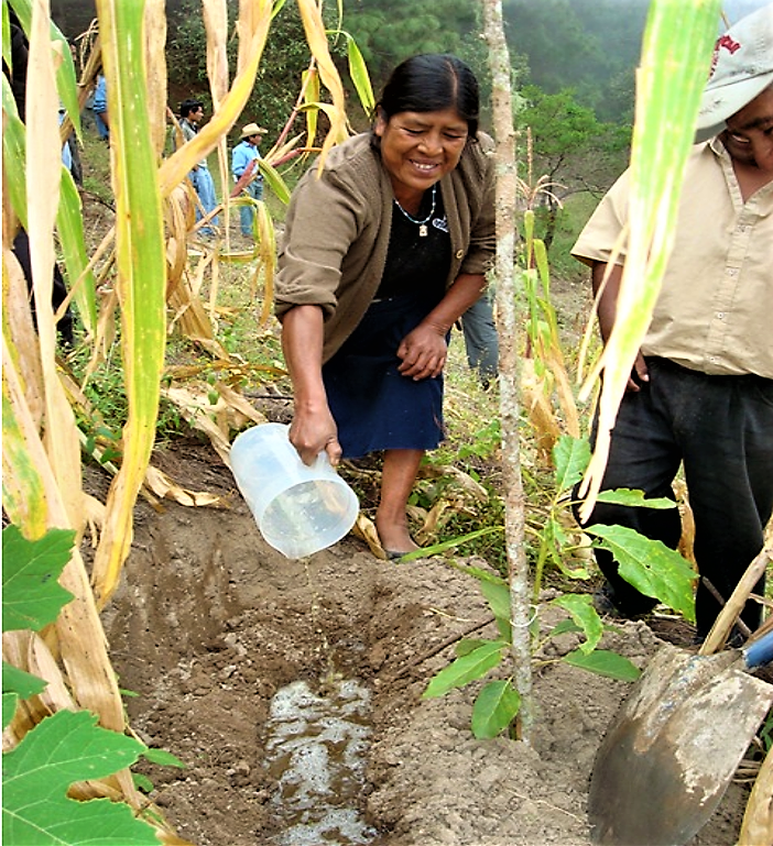 Farmer woman fertilises with urine, Oaxaca (Mexico). Source: STAUFFER (2009)