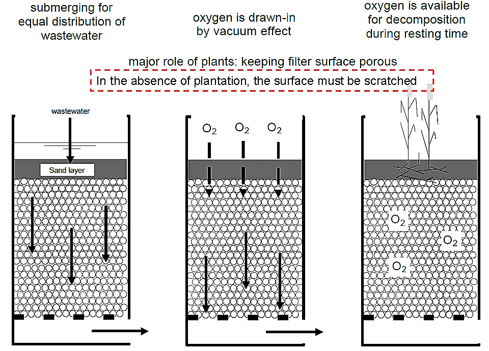 The principle of a vertical filter (planted or unplanted). Source: STAUFFER (n.y.) adapted from SASSE (1998)