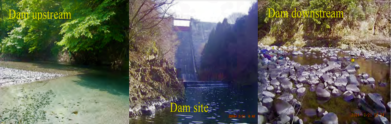 Comparison of the riverbed landscape between upstream and downstream reaches of the Yasugawa Dam in the Yasu River in central Japan. The dam is as old as 53 years and the distinctive riverbed armouring can be observed. White part of rocks indicates thick accumulation of organic matter originated from the reservoir