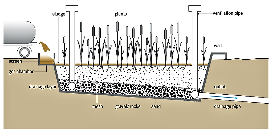 Schematic of a planted drying bed. Source: TILLEY et al. (2014)