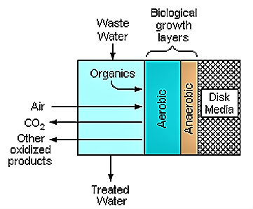Both aerobic and anaerobic microorganisms can live in the biofilm and contribute to the removal of pollutant form the water. Source: WIKIPEDIA (2007)