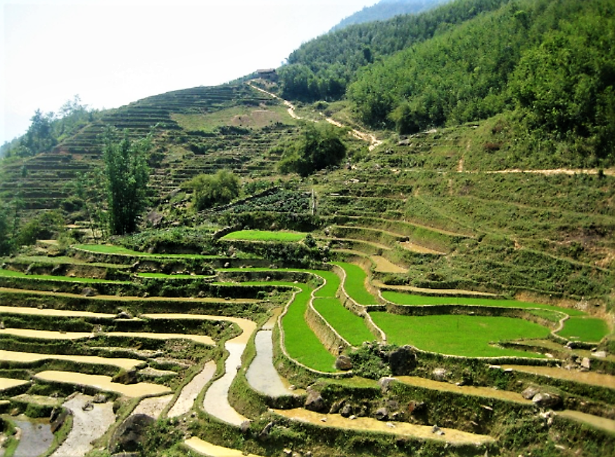 Rice cultures are the best known example of contour bunds. Here: Rice paddies in China.
