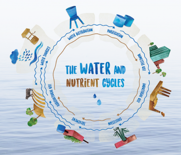 water_and_nutrient_cycle.png