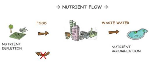 There is a linear approach to how we manage nutrients at the moment: Often, they are taken from the soil, consumed, and then discharged with wastewater in aquatic ecosystems, where they cause severe problems. Source: CONRADIN 2010.