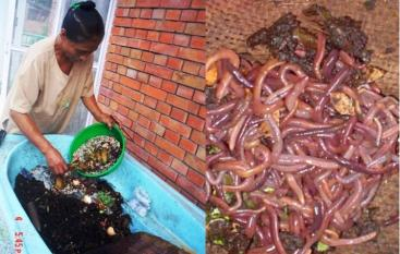 Vermi-composting in Kathmandu (left) and worms used for vermi-composting (right). Source: S. Pradhan, ENPHO