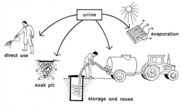 Alternative ways of handling/using urine diverted from toilets. Source: ESREY et al. (1998)