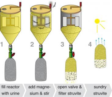 The basic steps of struvite production in the precipitation reactor. Source: B. ETTER (Eawag)