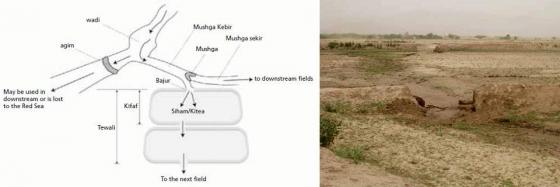 A field-to-field distribution in Eritrea.The picture on the right side shows cuts on the bunds to irrigate the next field. Source: FAO (2010)