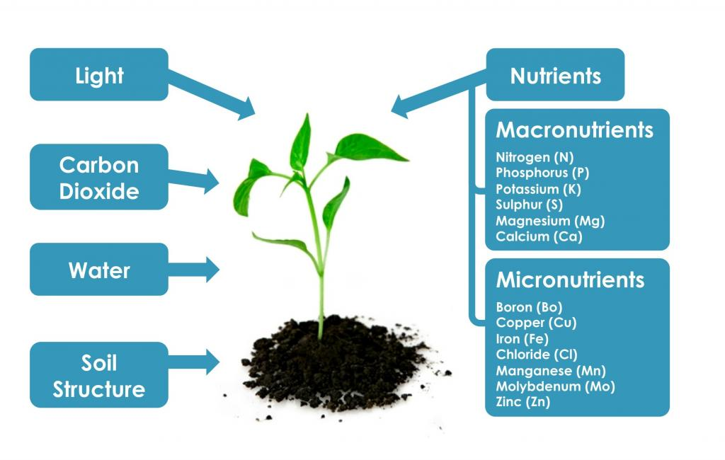 plant macronutrients Sixteen plant food nutrients are essential for proper crop development primary (macro) nutrients, secondary nutrients, and micronutrients primary.