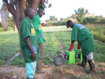 Urine application in agriculture as seen in Burkina Faso. Source: GTZ ecosan (2008)
