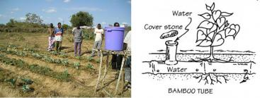 A self-made irrigation system in Africa with a bucket as a water reservoir and simple plastic hoses for the distribution. If bamboo is available, it can be used as distribution pipes. Source: STANDISH (2009) and INFONET-BIOVISION (2010)