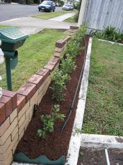 Mulch helps retain moisture in the soil. Drip irrigation lines direct water directly to where plants need it. Source: MENEZES (2008)