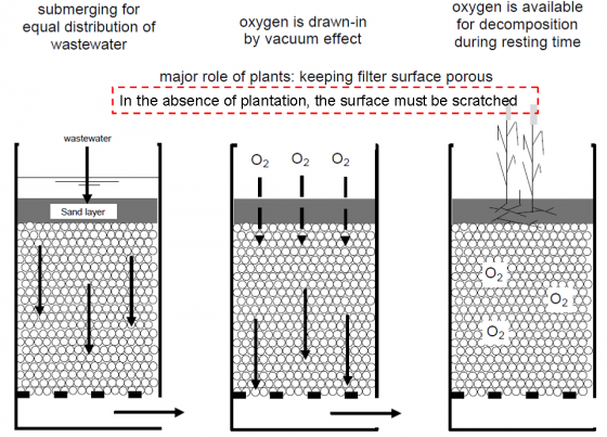 The principle of a vertical filter (planted or unplanted). Source: B. Stauffer. adapted from SASSE (1998)