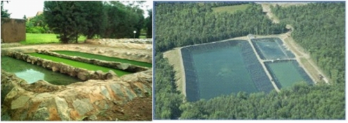 Waste stabilisation ponds sswm for Design of waste stabilization pond systems
