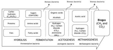 Anaerobic digestion: complex organic molecules, proteins and fats are broken down in a four-step process in to a mixture of methane (CH4) and carbon dioxide (CO2) and some trace gases. The biogas can be collected and the CH4 be used as a combustible. Source: SPUHLER 2010