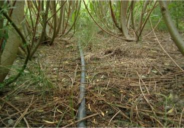 An irrigation pipe placed in a double-row of a willow plantation. Source: LARSSON (2003)