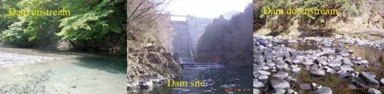 Comparison of the riverbed landscape between upstream and downstream reaches of the Yasugawa Dam in the Yasu River in central Japan. The dam is as old as 53 years and the distinctive riverbed armoring can be observed. White part of rocks indicates thick accumulation of organic matter originated from the reservoir. Source: TAKEMON (2006)