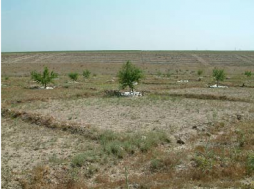 Negarim micro basins with almond trees in Iran. Source: TAVAKOLI (2004)