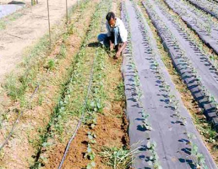 Mulching sswm for Soil erosion in hindi