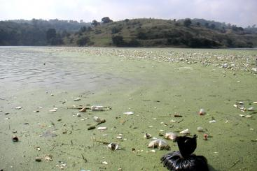 High pollution in Guadalupe Lake, Mexico. Source: UAF (2010)
