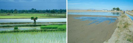 Two typical surface basin irrigation fields. Source: USU (n.y.)