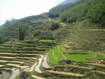 Rice cultures are the best known example of contour bunds. Here: Rice paddies in China. Source: WILDCHINA (2012)